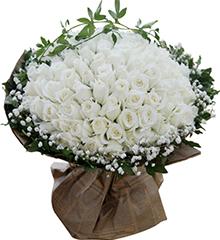 99白玫瑰