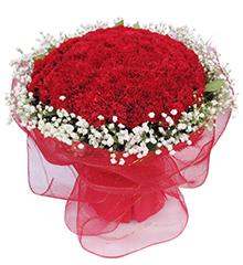 健康长久:99枝红色康乃馨