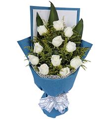 心语心愿:11枝白玫瑰