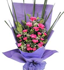 紫色情愫:紫色康乃馨20枝