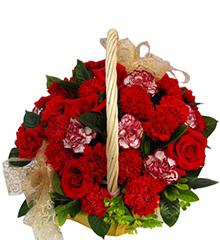 感谢一生:红康乃馨20枝,紫边康乃馨6枝,红玫瑰6枝