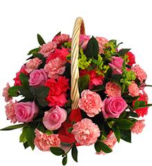 暖意:桃红色玫瑰10枝,红康乃馨10枝,粉色康乃馨30枝