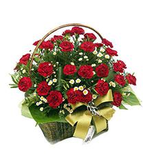 温馨问候:50枝红康乃馨