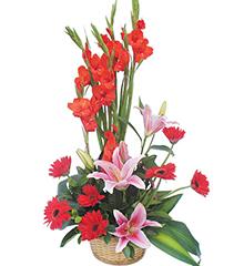 顺心顺意:粉香水百合2枝、红剑兰6枝,红扶郎9枝