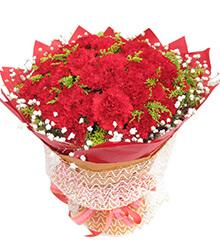 馨情无限:红色康乃馨50枝