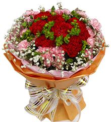 金色年华:12枝红色康乃馨,30枝粉康乃馨
