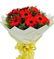 晴日:红色太阳花(即扶郎)16枝