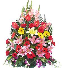 欣悦:百合、玫瑰、扶郎、红掌、剑兰等花材