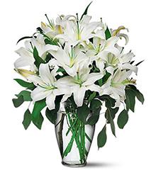 把爱留在心底:8枝白色百合,绿叶间插。