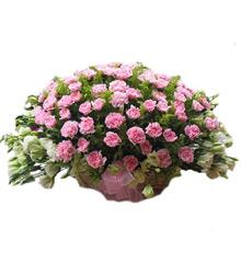 迷香:99朵粉色康乃馨