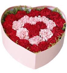 心心同在:25只康乃馨混搭花盒