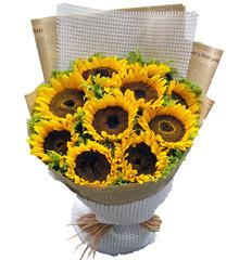爱是阳光:11朵向日葵花束