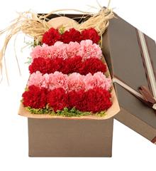 暖暖的爱:19朵康乃馨礼盒 母亲节生日鲜花