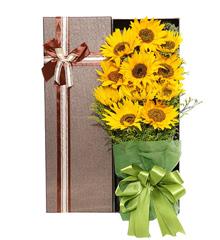 向往美好:11枝盒装向日葵
