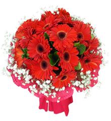 勇气:12枝红色扶郎花束
