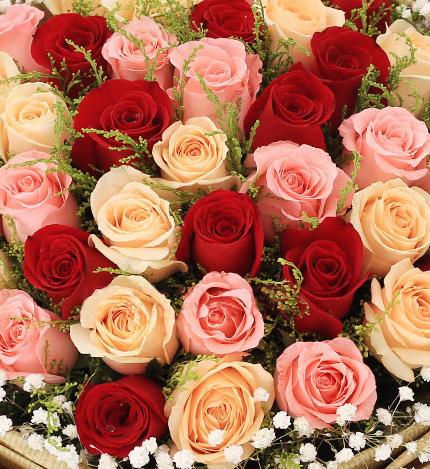 33支红粉香槟玫瑰混搭