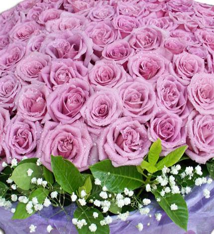 12朵紫玫瑰花语_紫玫瑰花语-18朵紫玫瑰花语-紫色玫瑰哪里有卖-紫玫瑰花图片