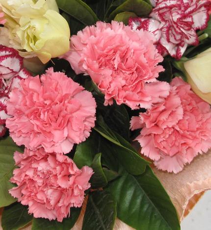 感恩礼赞:19支粉康乃馨,5支紫边康乃馨