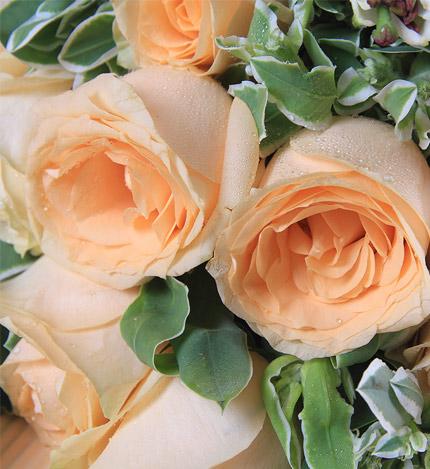 一生的守候:19朵香槟玫瑰
