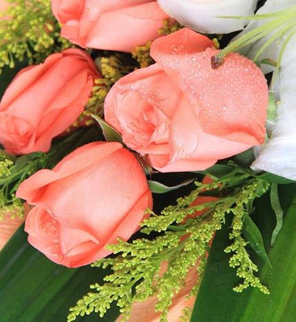 温暖的怀抱:百合2枝,粉玫瑰6枝