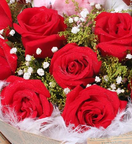 爱一心一意:11朵精选昆明A级红玫瑰