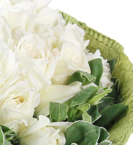 清纯女人香:白玫瑰21枝